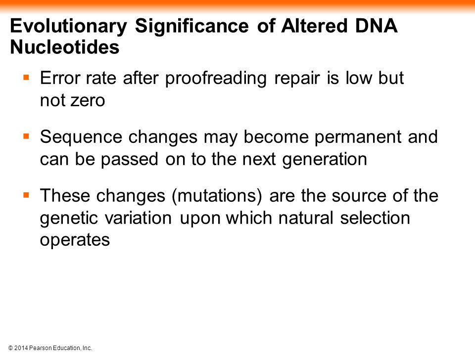 Evolutionary Significance of Altered DNA Nucleotides