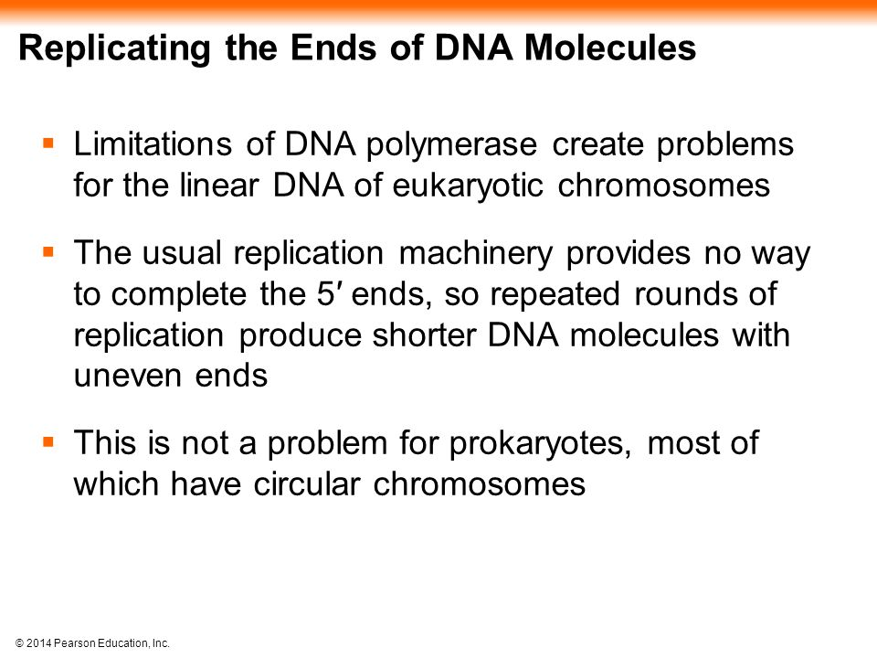 Replicating the Ends of DNA Molecules