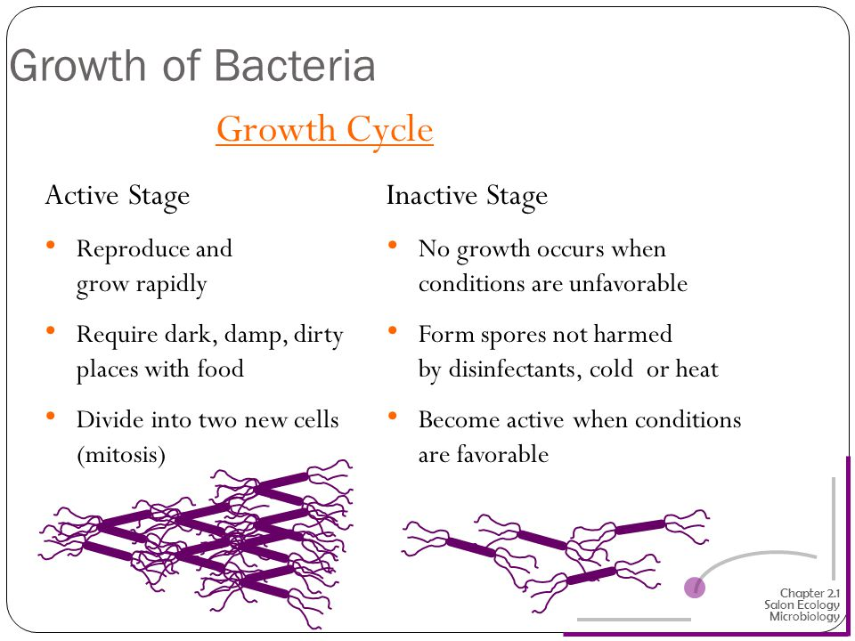 Growth of Bacteria Growth Cycle Active Stage Inactive Stage