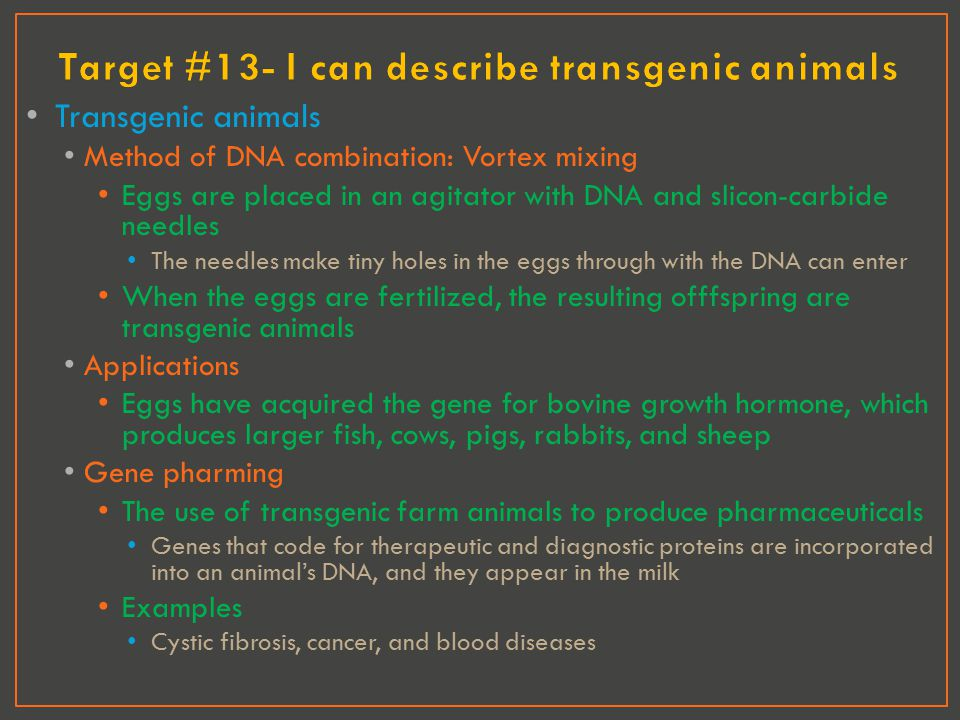Target #13- I can describe transgenic animals