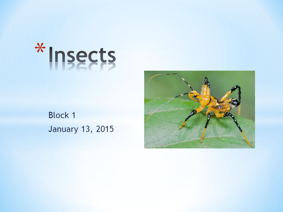 Insects Block 1 January 13, 2015