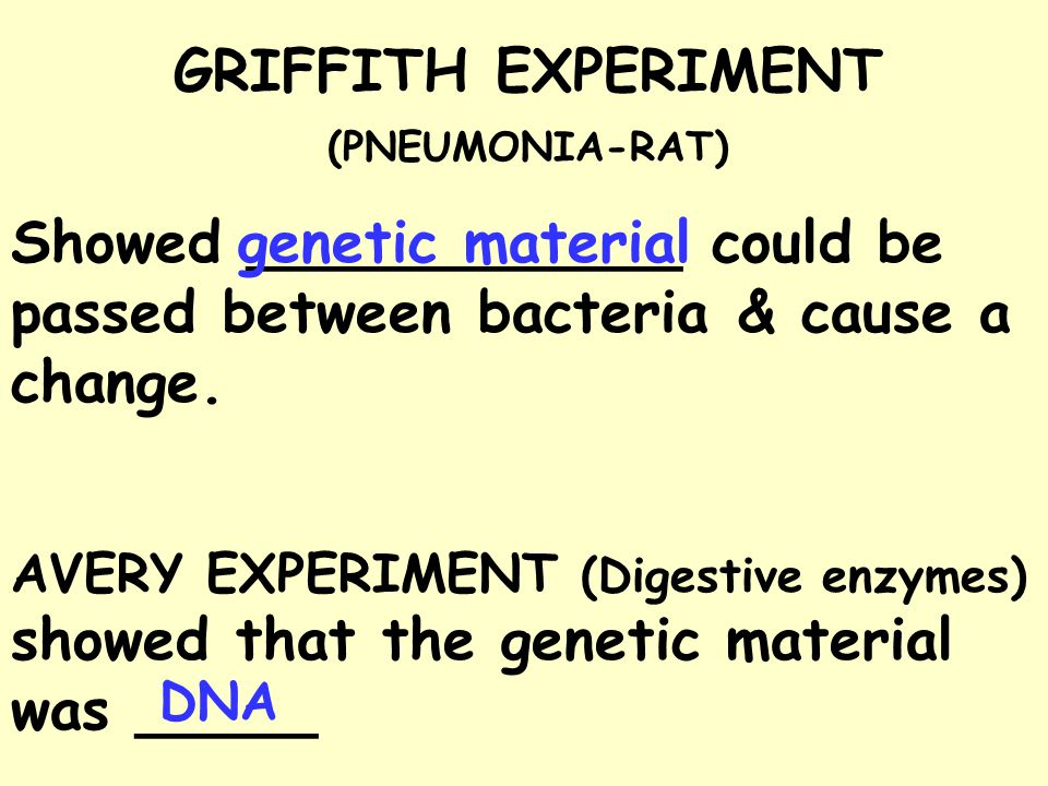 GRIFFITH EXPERIMENT (PNEUMONIA-RAT)