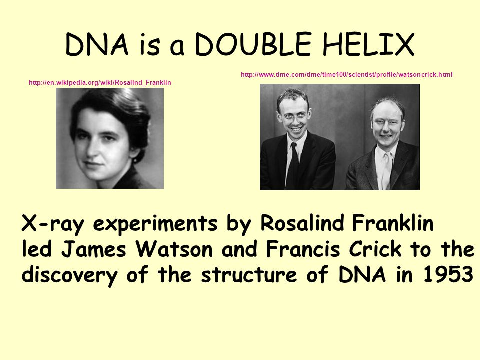 DNA is a DOUBLE HELIX X-ray experiments by Rosalind Franklin