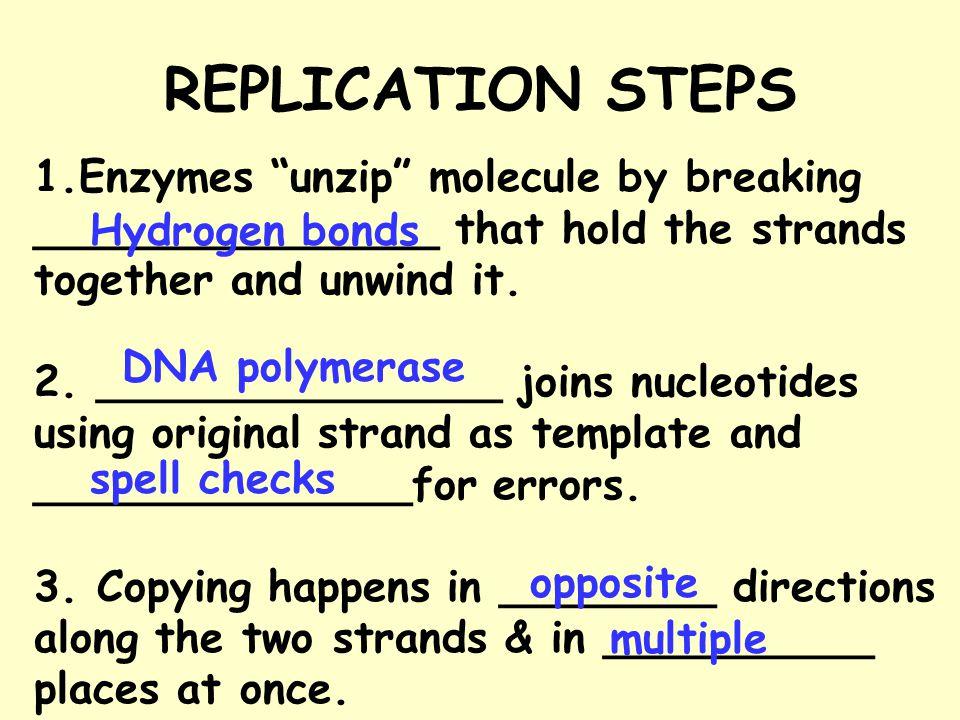 REPLICATION STEPS Enzymes unzip molecule by breaking