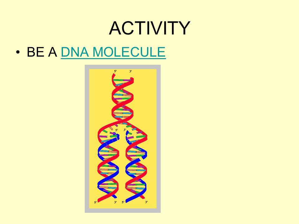 ACTIVITY BE A DNA MOLECULE