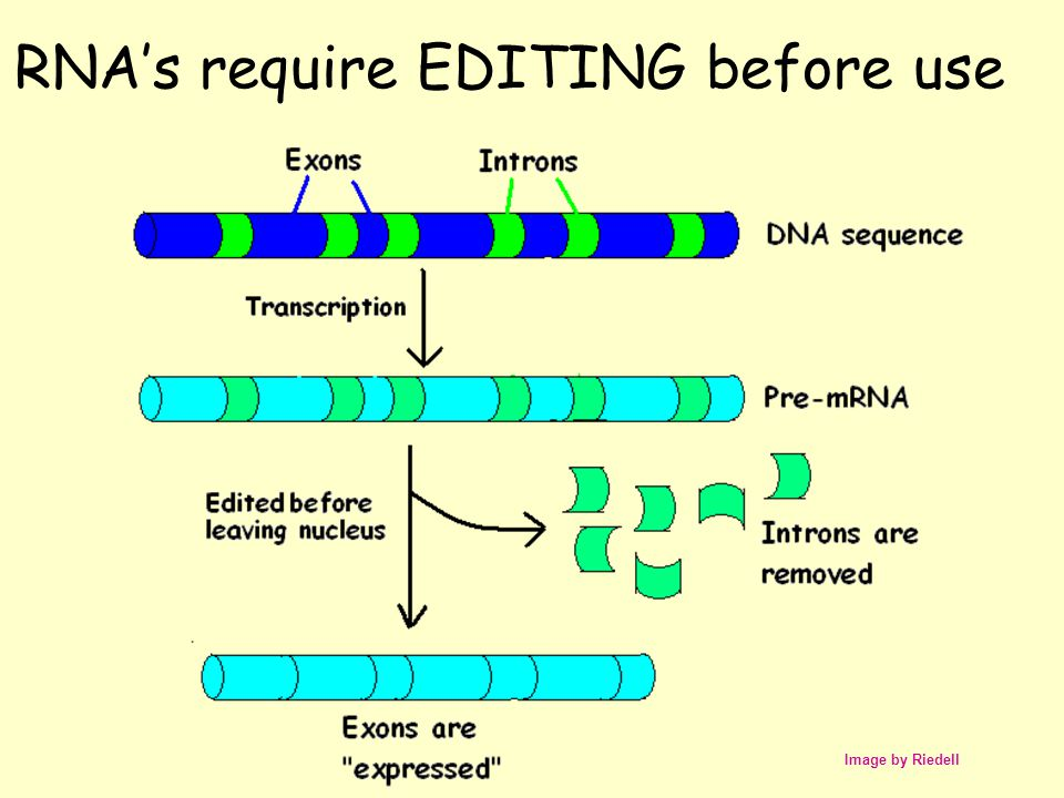 RNA's require EDITING before use