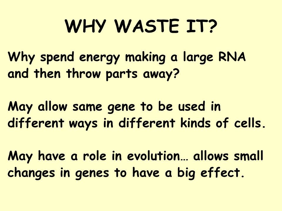 WHY WASTE IT Why spend energy making a large RNA