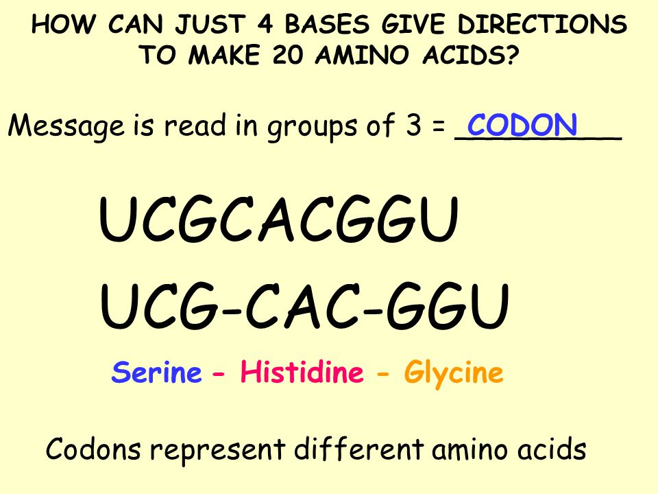 HOW CAN JUST 4 BASES GIVE DIRECTIONS TO MAKE 20 AMINO ACIDS