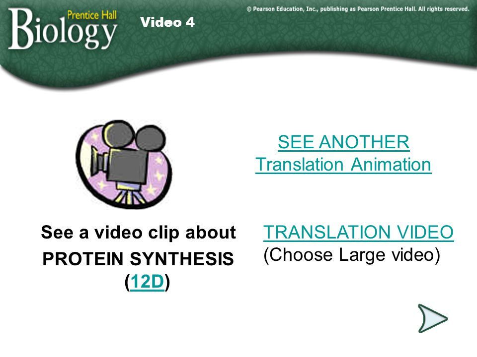 SEE ANOTHER Translation Animation
