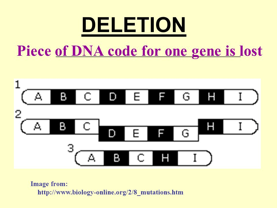 DELETION Piece of DNA code for one gene is lost