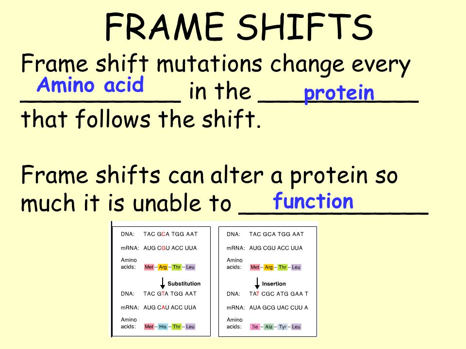 FRAME SHIFTS Frame shift mutations change every ___________ in the ___________ that follows the shift.