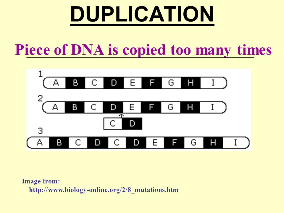 DUPLICATION Piece of DNA is copied too many times