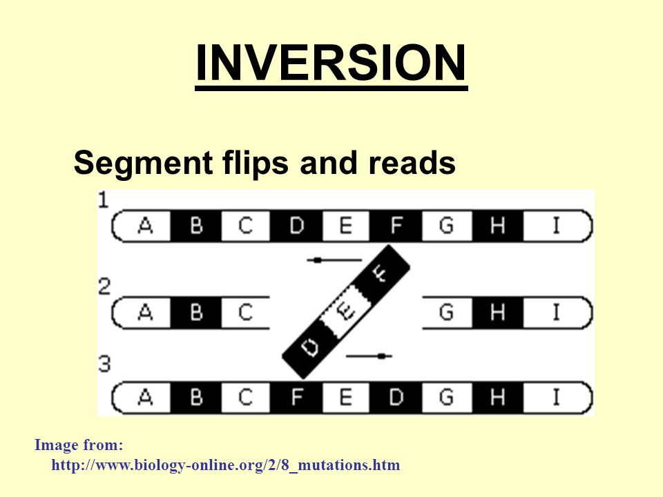 INVERSION Segment flips and reads backwards