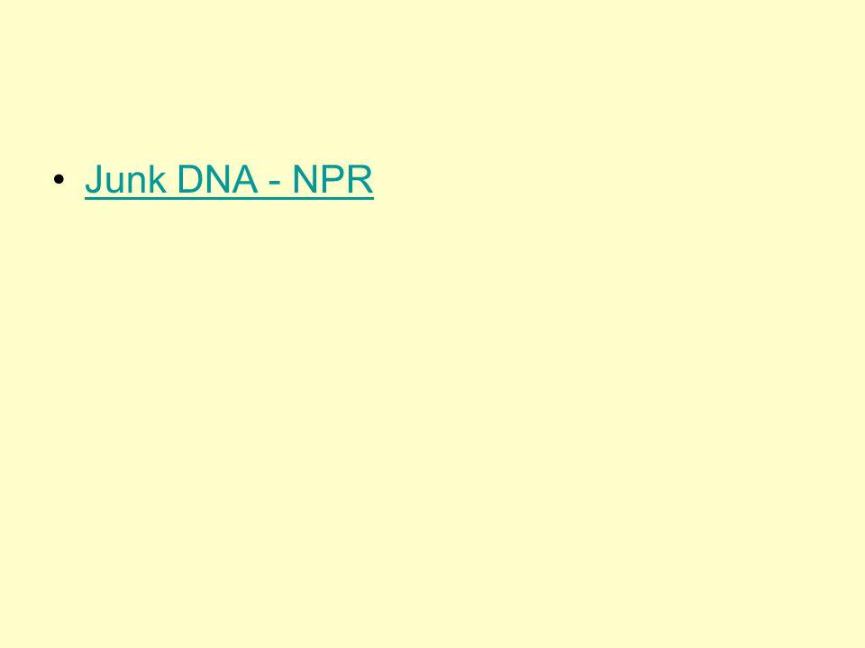 Junk DNA - NPR