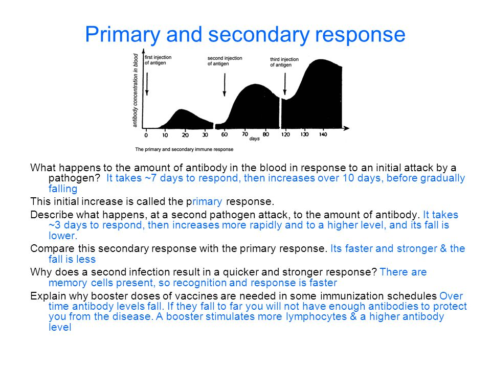 Primary and secondary response