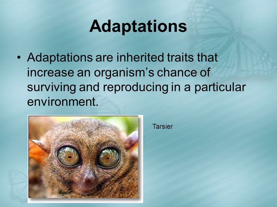 Adaptations Adaptations are inherited traits that increase an organism's chance of surviving and reproducing in a particular environment.