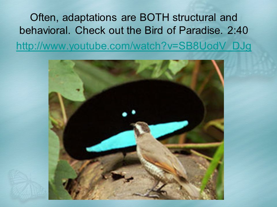 Often, adaptations are BOTH structural and behavioral