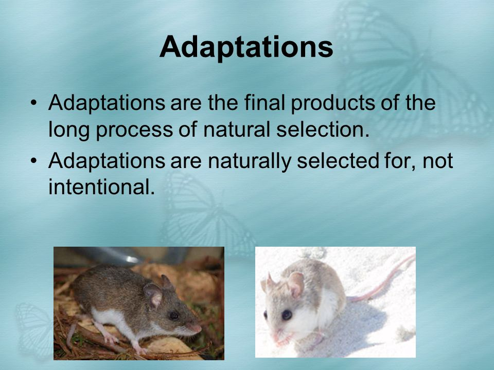 Adaptations Adaptations are the final products of the long process of natural selection.