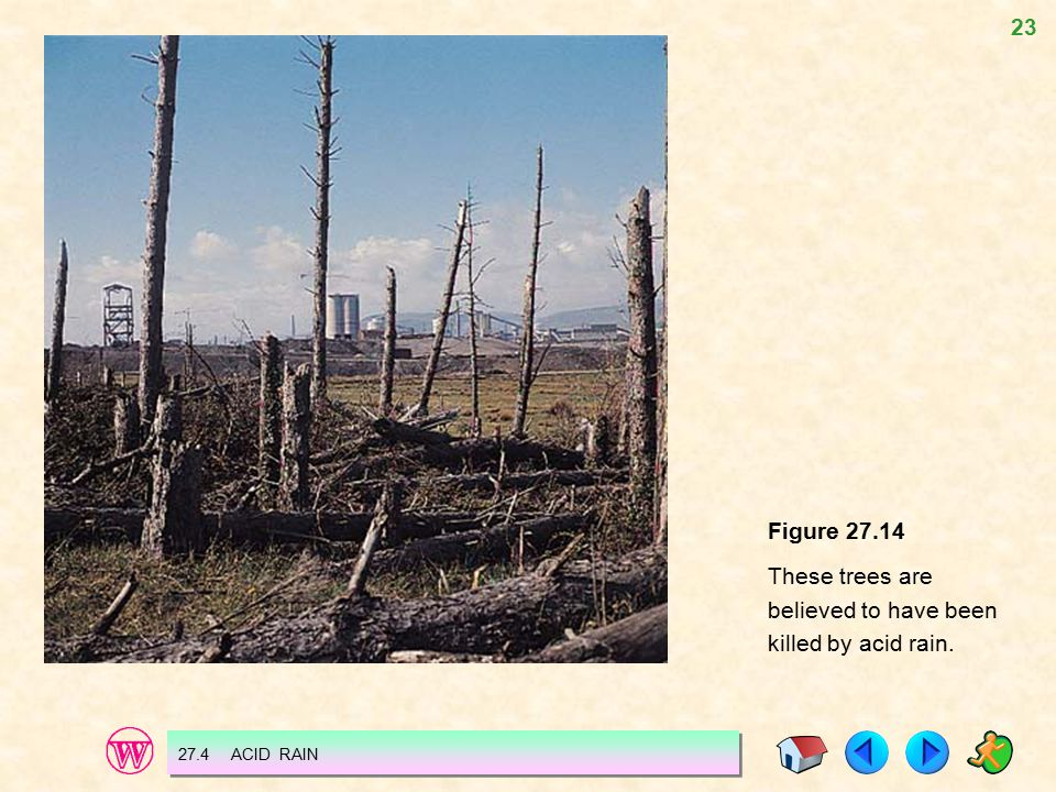 These trees are believed to have been killed by acid rain.