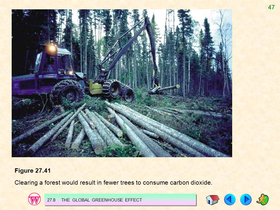 Figure 27.41 Clearing a forest would result in fewer trees to consume carbon dioxide.