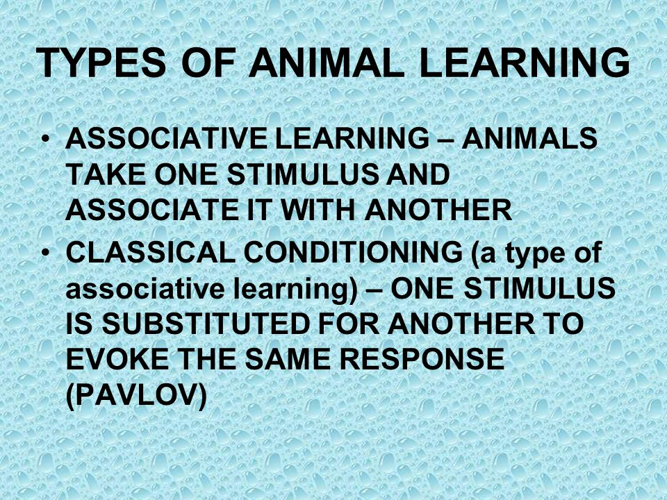 TYPES OF ANIMAL LEARNING