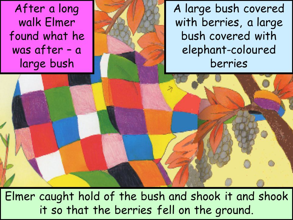 After a long walk Elmer found what he was after – a large bush