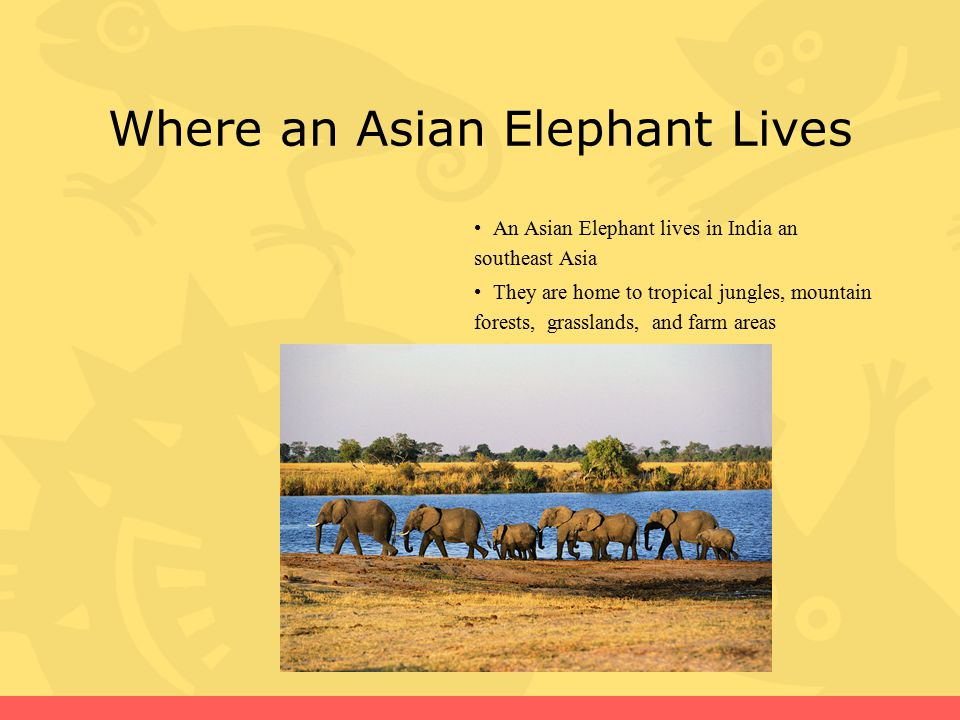 Where an Asian Elephant Lives