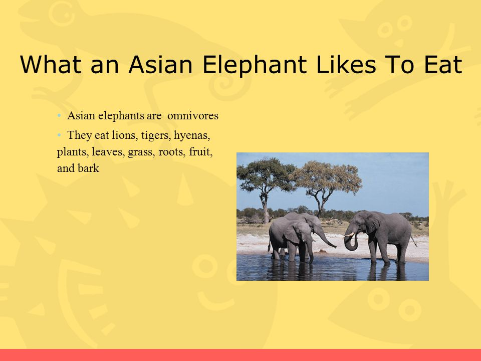 What an Asian Elephant Likes To Eat