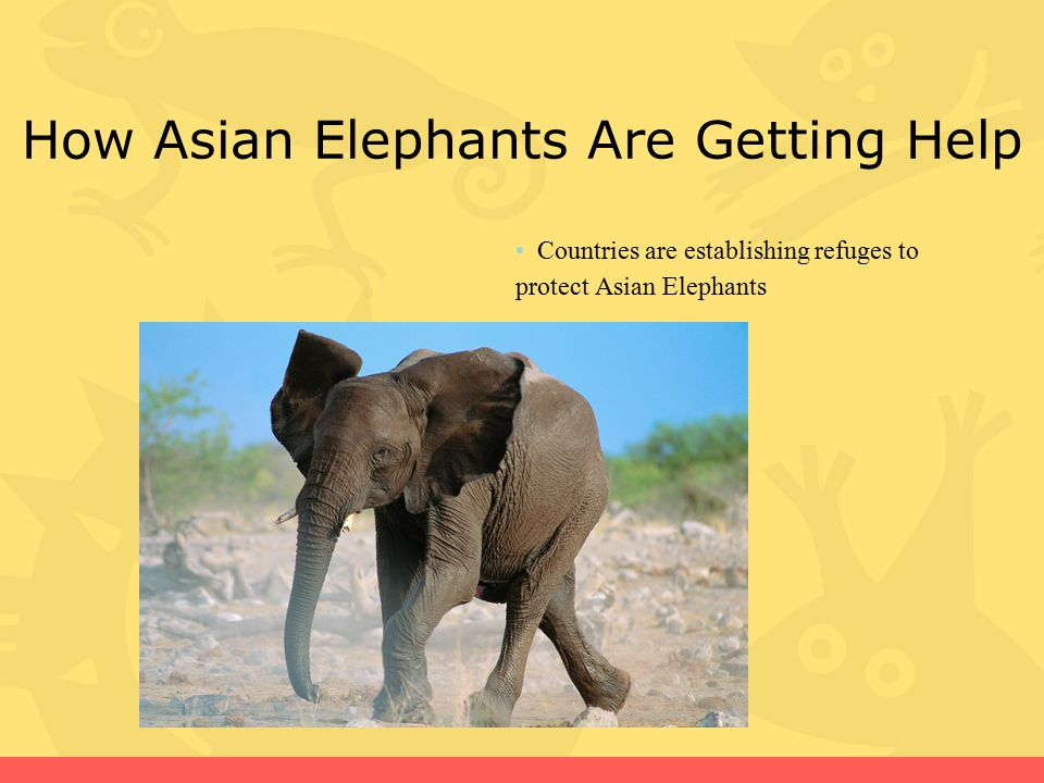 How Asian Elephants Are Getting Help