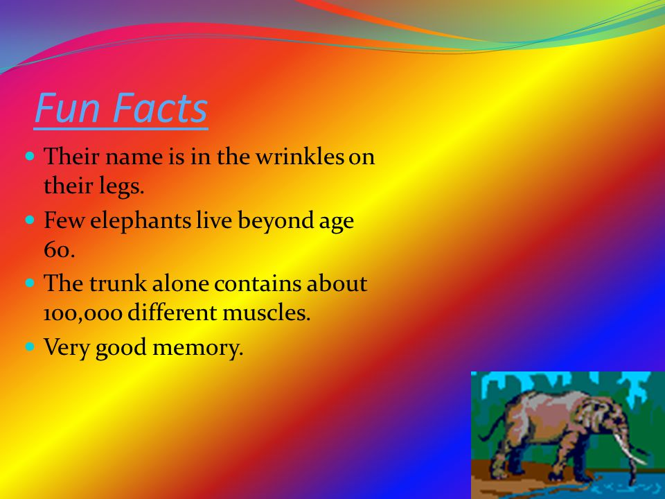 Fun Facts Their name is in the wrinkles on their legs.