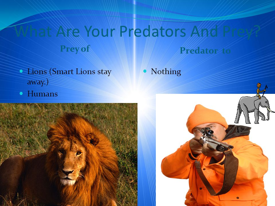 What Are Your Predators And Prey