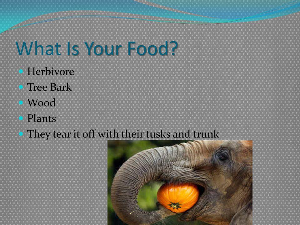 What Is Your Food Herbivore Tree Bark Wood Plants