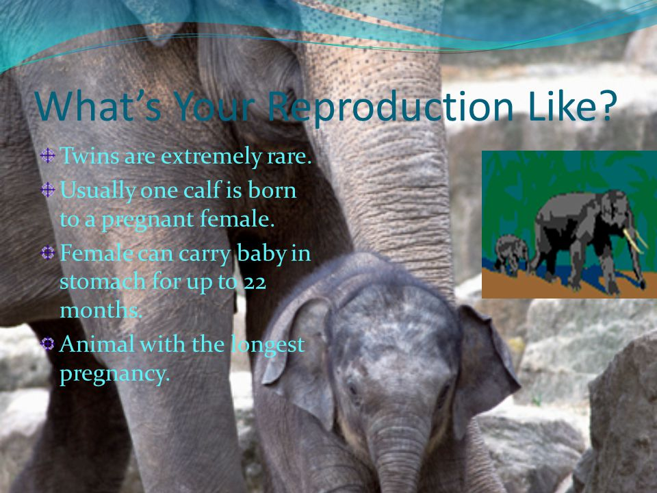 What's Your Reproduction Like