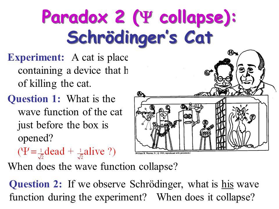 Paradox 2 (Y collapse): Schrödinger's Cat