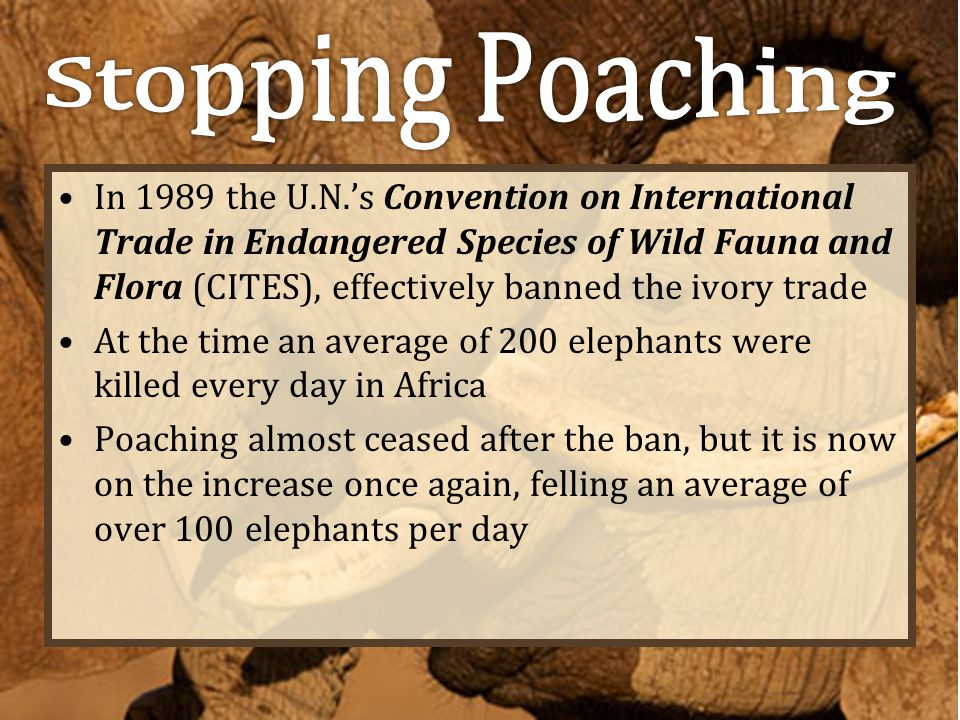 Stopping Poaching