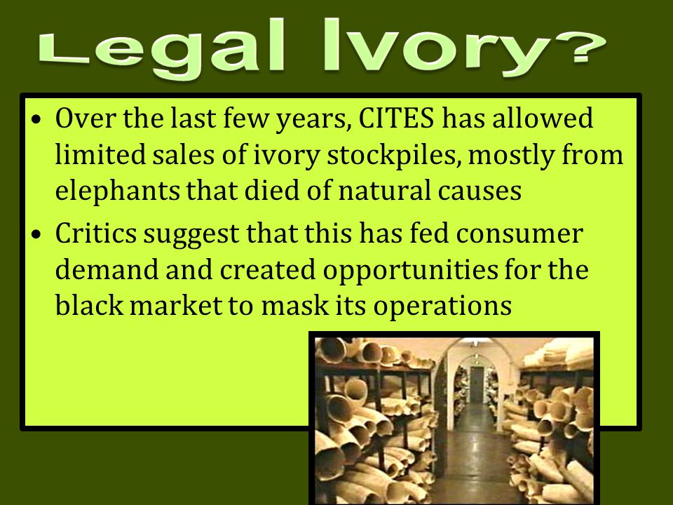 Legal Ivory Over the last few years, CITES has allowed limited sales of ivory stockpiles, mostly from elephants that died of natural causes.