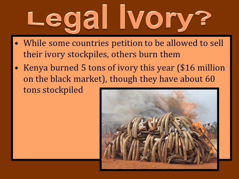 Legal Ivory While some countries petition to be allowed to sell their ivory stockpiles, others burn them.