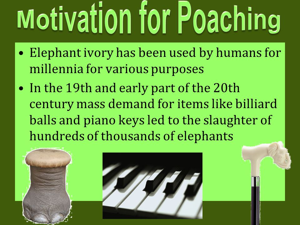Motivation for Poaching
