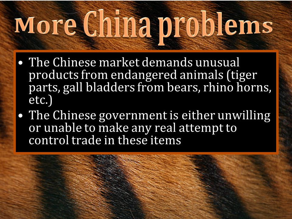 More China problems The Chinese market demands unusual products from endangered animals (tiger parts, gall bladders from bears, rhino horns, etc.)