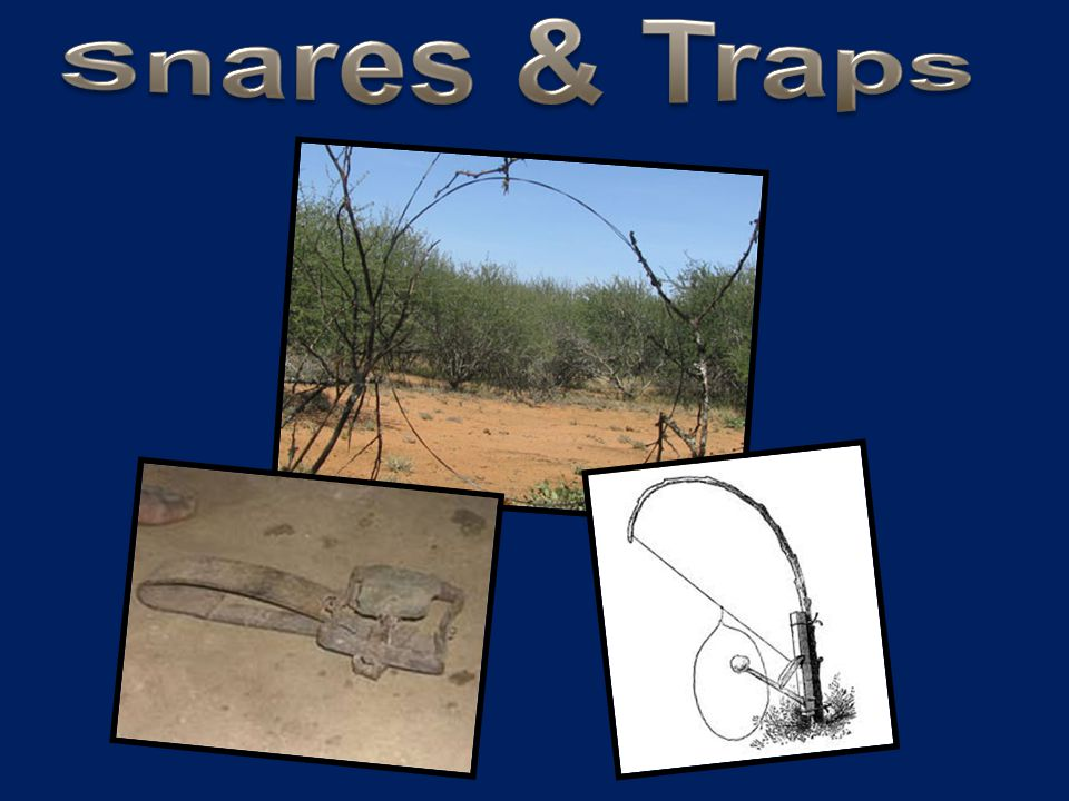 Snares & Traps
