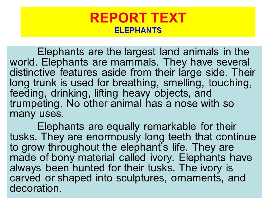 REPORT TEXT ELEPHANTS