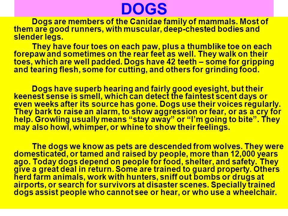 DOGS Dogs are members of the Canidae family of mammals. Most of them are good runners, with muscular, deep-chested bodies and slender legs.