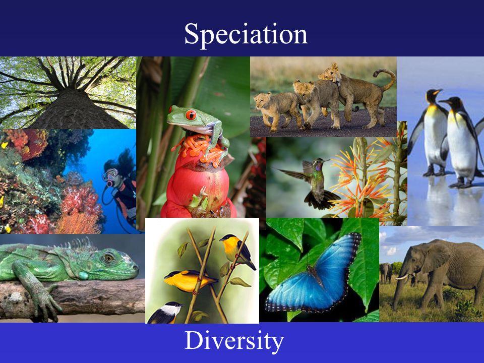 Speciation Diversity