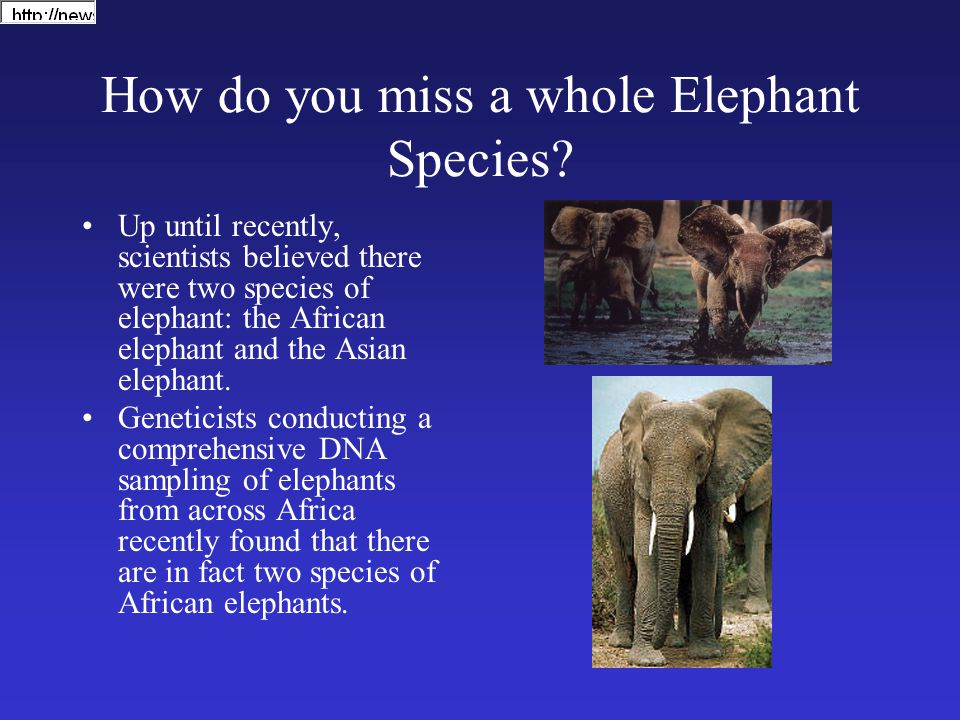 How do you miss a whole Elephant Species