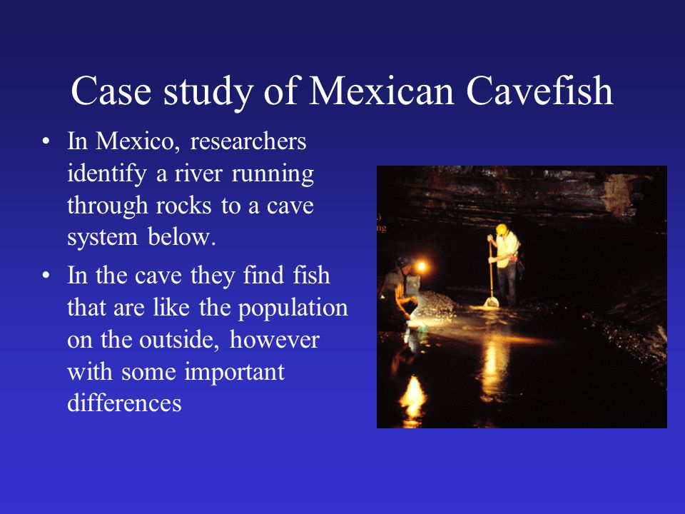 Case study of Mexican Cavefish