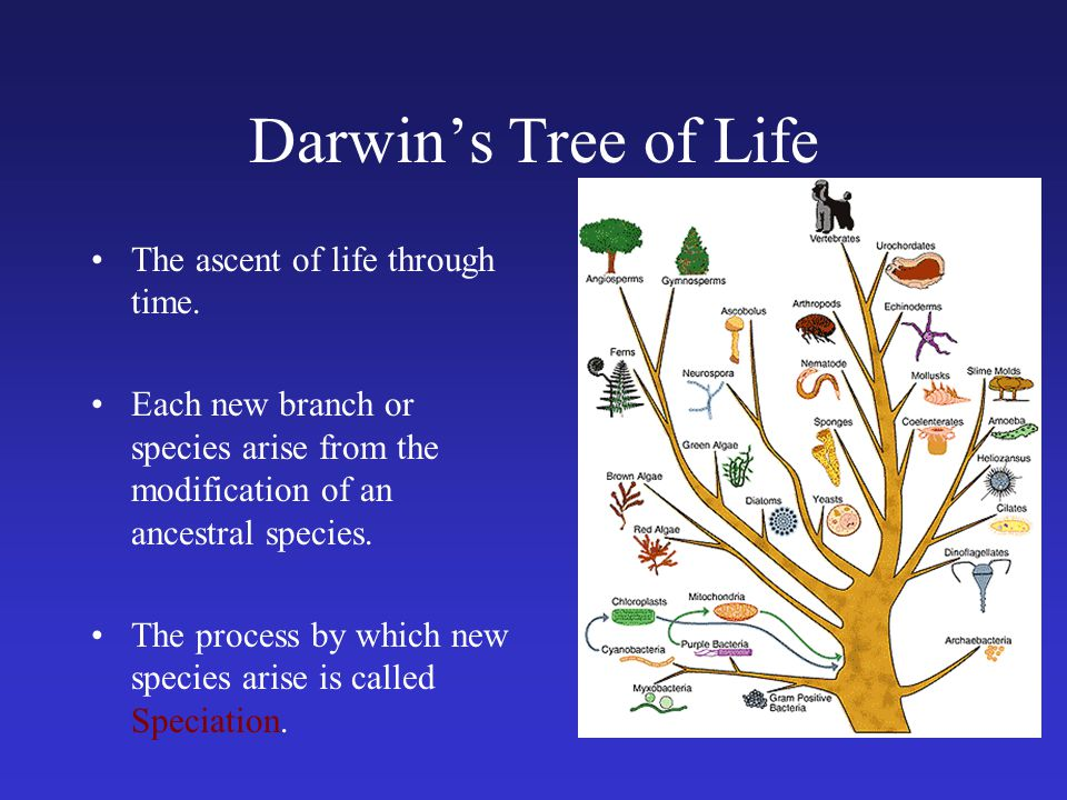 Darwin's Tree of Life The ascent of life through time.