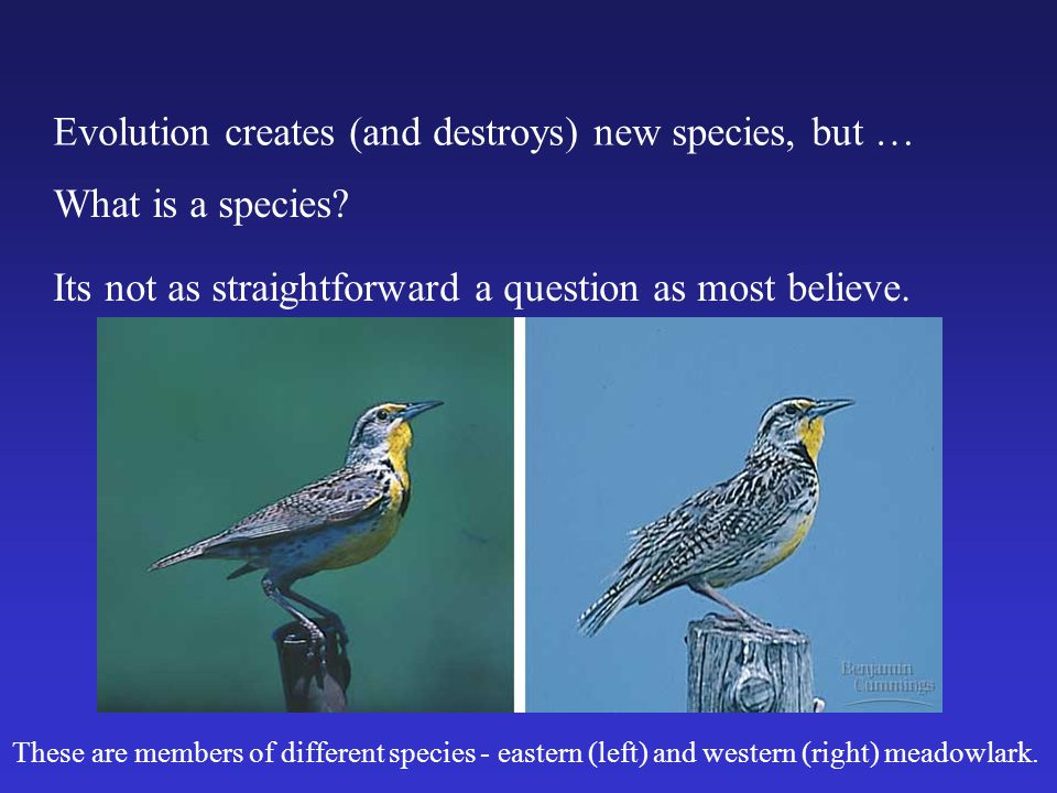 Evolution creates (and destroys) new species, but …