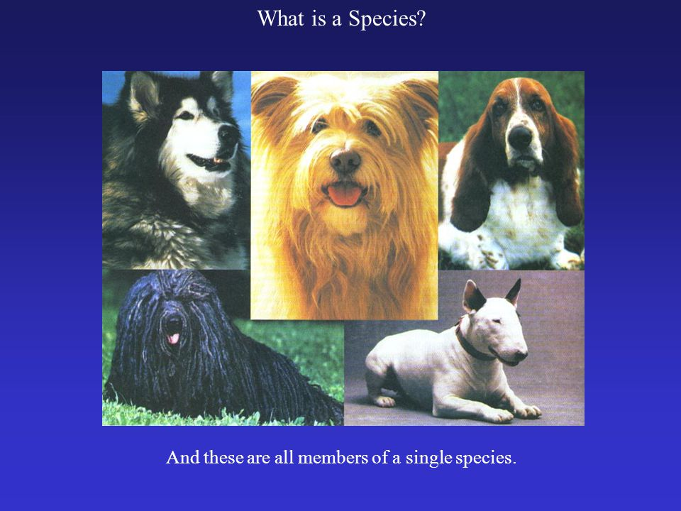 What is a Species And these are all members of a single species.