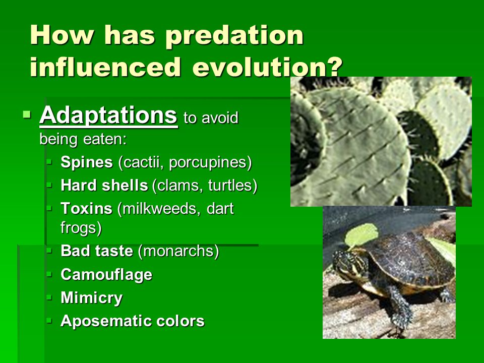 How has predation influenced evolution