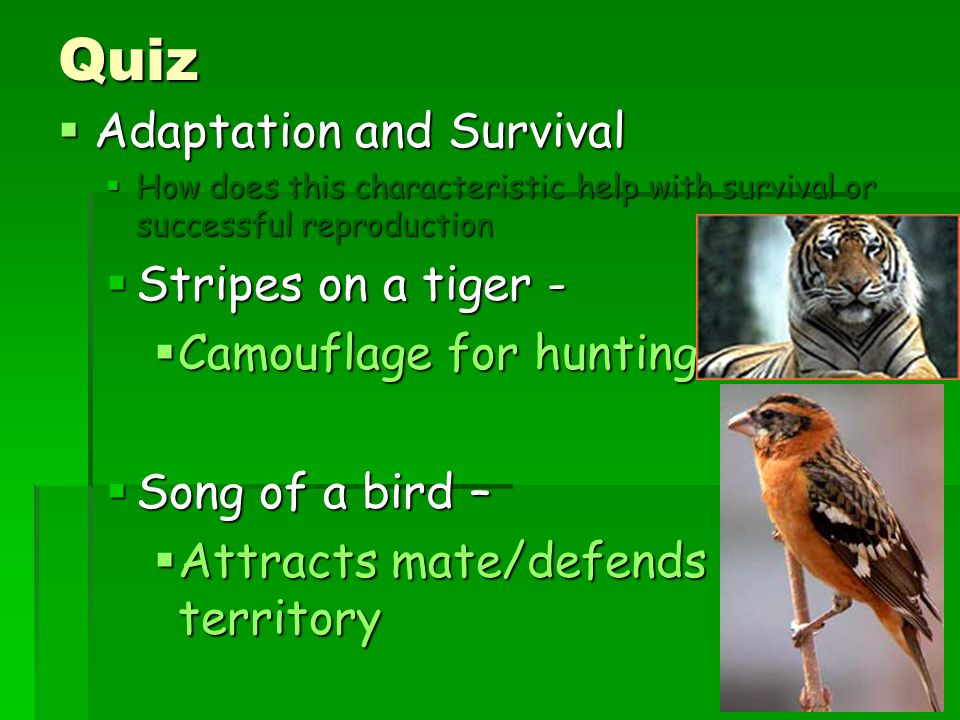 Quiz Adaptation and Survival Stripes on a tiger -